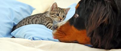 Particuliers_assurance_chiens-chats_casclient